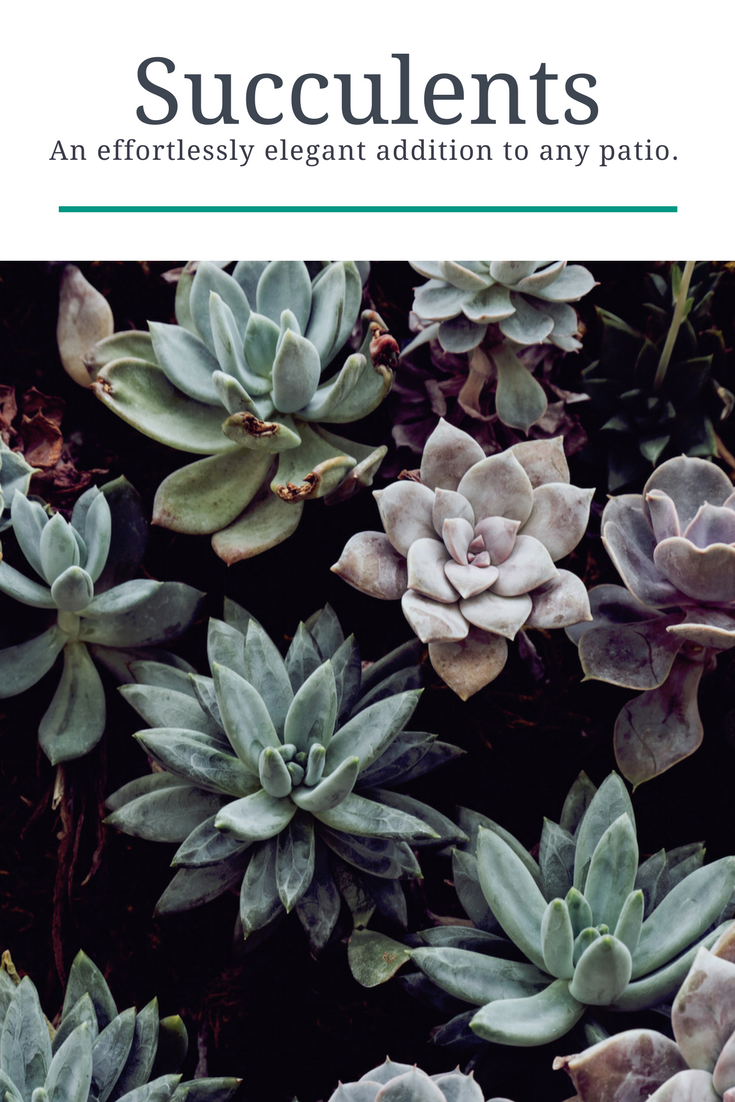 Succulents are an effortlessly elegant addition to any patio.