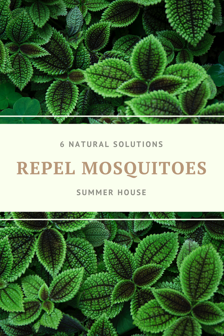 These 6 plants can repel mosquitoes naturally.