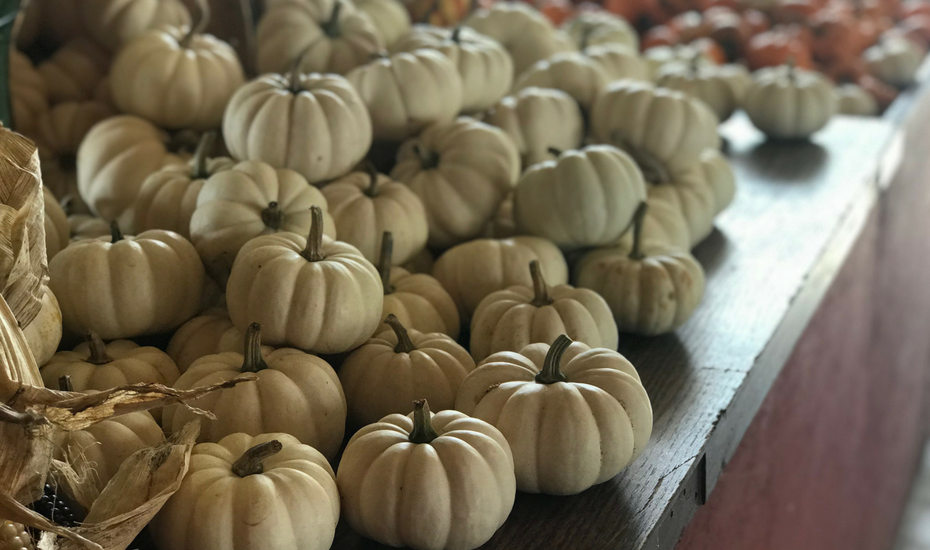 When it comes to fall decorations, pumpkins rule. Whether you're creating an elegant tablescape, lining your front walk or outfitting your patio with a dose of fun – pumpkins are the easy go-to that never disappoint.